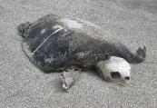 This is what happens to a fish...err, sea turtle out of water!